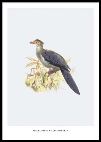 BIRDS NO. 6 POSTER