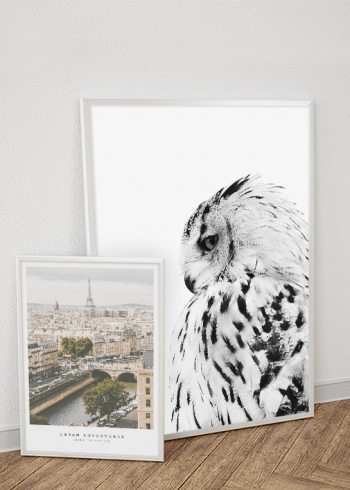 WHITE OWL & URBAN ADVENTURES POSTERS