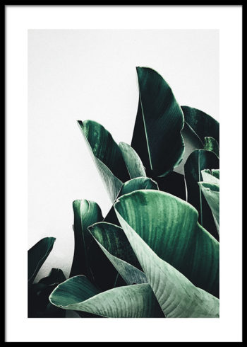 LEAVES CLUSTER POSTER