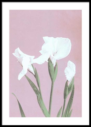 COLORIZED VINTAGE FLOWERS NO. 3 POSTER